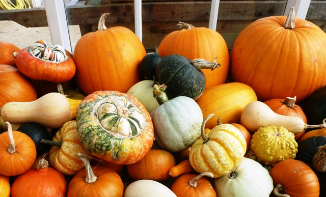 Autumn produce at Helmsley Walled Garden, Yorkshire - by Zoe Dawes