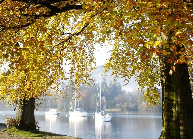 Autumn trees by Windermere in the Lake District - Zoe Dawes