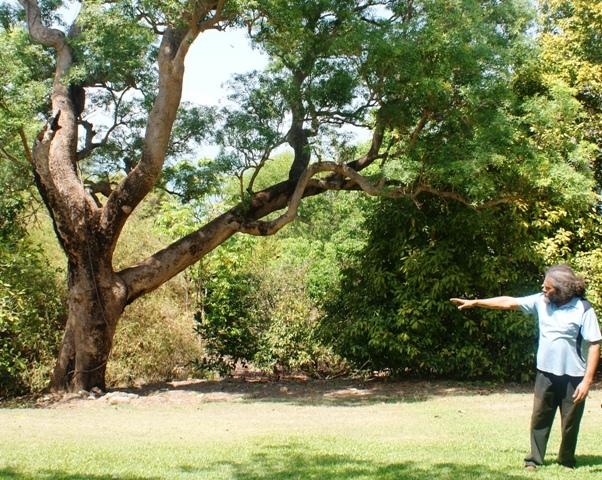 Batji tour of Darwin with Robbie Mills