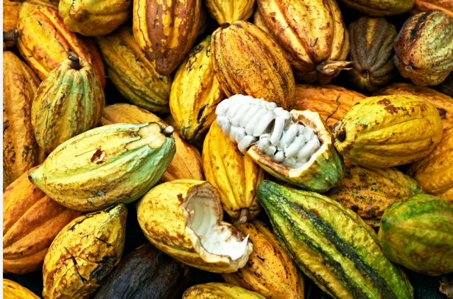 Cocoa pods - Boucan Hotel Chocolat St Lucia