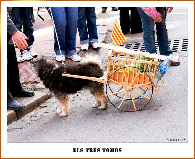 Dog cart at Fiesta dels Tres Tombs Barcelona - by ferran pestaña
