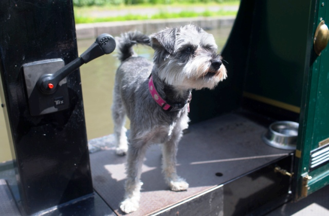 Mabel the dog afloat on her Anglo Welsh canal boat holiday