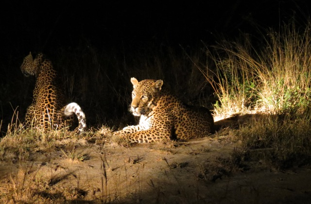 Night Drive Africa - Luxury Safari Company