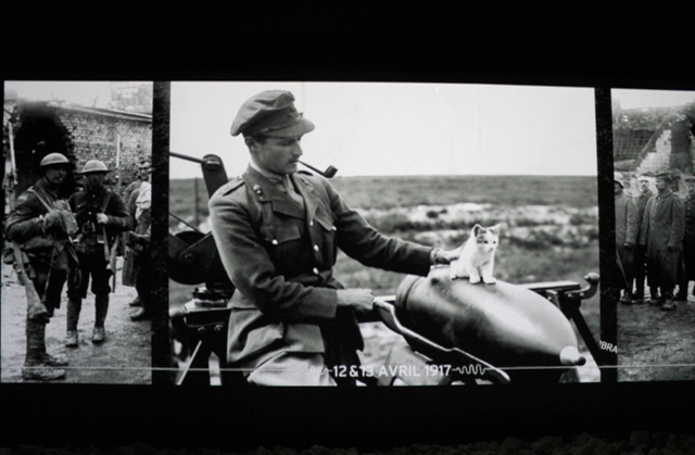 WW1 British officer and kitten, Wellington Quarry - Arras, France