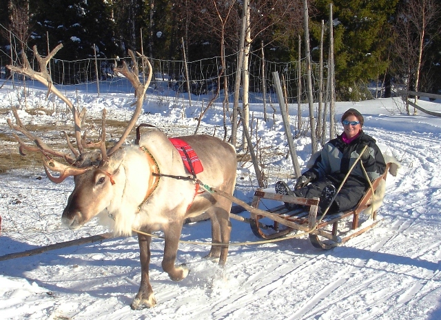 Reindeer racing in Finland - Quirky Traveller