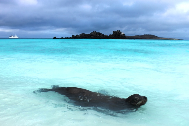 Sea lion Gardner Bay Galapagos Islands Ecuador - image Zoe Dawes