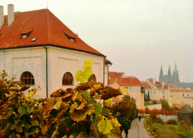 Vines in Prague in Autumn - by Zoe Dawes