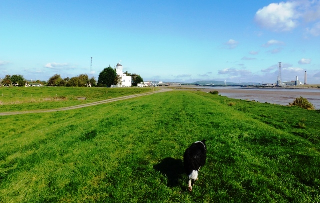 Sparky leading way back to West Usk Lighthouse, near Newport, Wales