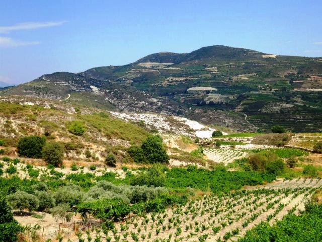 Zambartas Vineyards in Cyprus
