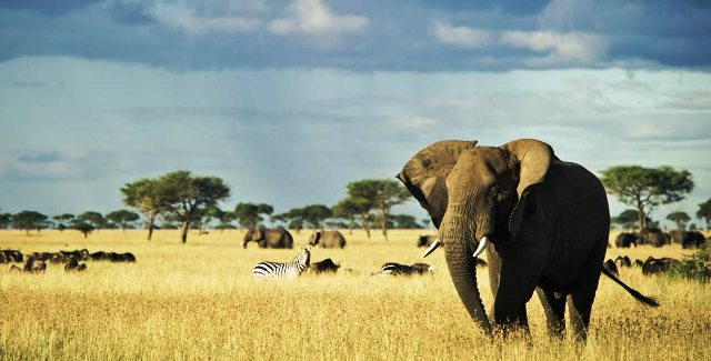 Elephants and other wildlife in Tanzaznia - photo Singita.com