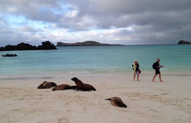 Sea lions on Gardner Bay, Espanola - Galapagos islands - image Zoe Dawes