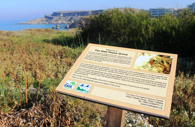 Gaia Peace Grove at Ghajn Tuffieh headland, Golden Sands bay, Malta - image Zoe Dawes