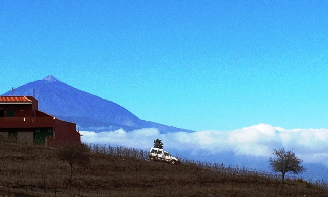 Mount Teide from vineyard Tenerife