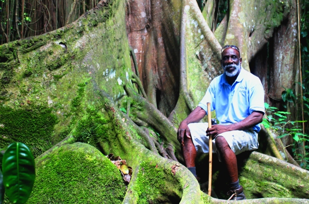 O'neil by kapok tree in Wingfield rainforest St Kitts - by Zoe Dawes