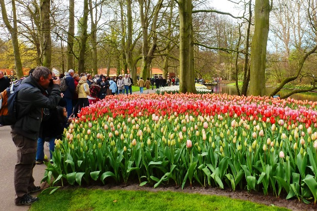 Photographer at Keukenhof - by Zoe Dawes