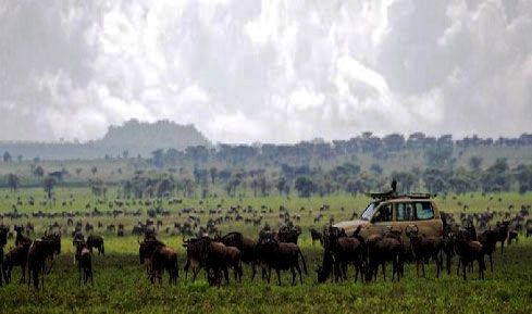 Serengeti Migration - on luxury safari in Africa
